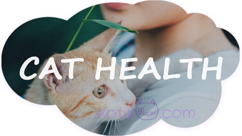 What are the symptoms of a sick cat?