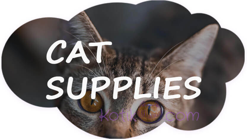 What supplies do I need for a cat?