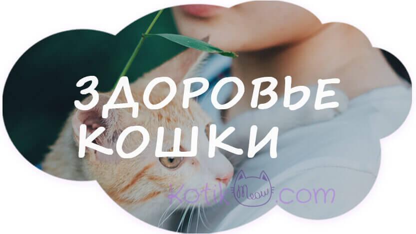 Что вредно для кошек, здоровье кошек