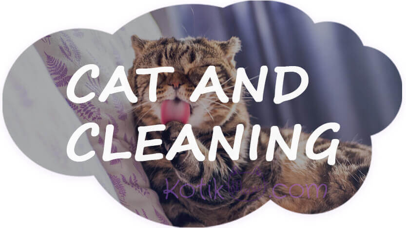 Can you have a clean house with a cat?