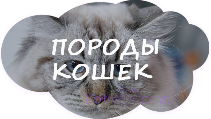 Породы кошек с фотографиями