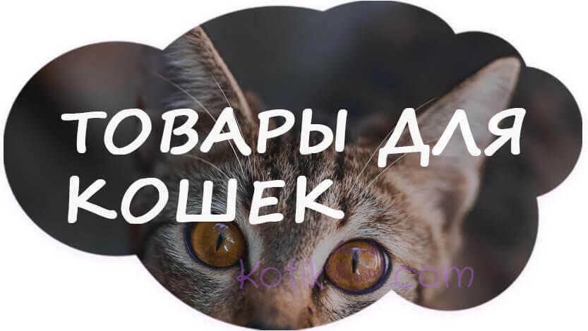 Товары для кошек недорого
